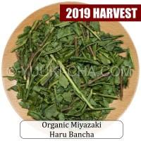 Organic Miyazaki Haru Bancha