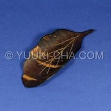 Leaf Cherry Bark Akita Tea Scoop
